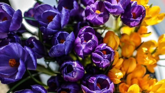 6 tipů pro jaro plné síly