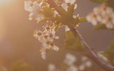 Síla jara   záznam